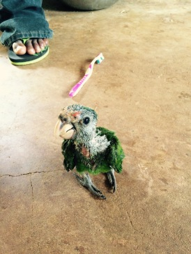 Possibly the ugliest parrot in the world.